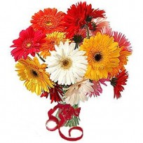Bunch of 12 Mix Color Gerberas