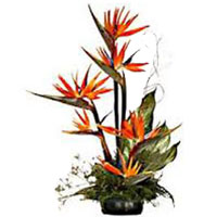 Bird Of Paradise Arrangement 15 Flowers