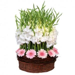 10 pink gerberas and 80 white gladiolus in basket