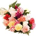 Mixed Carnation Bouquet 24 Flowers