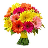 Mixed Gerbera Bouquet 24 Flowers