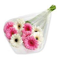 Pink White Gerbera Bouquet 12 Flowers