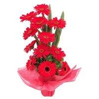 Red Gerbera Basket 12 Flowers