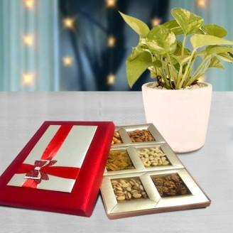 DESIGNER DRY FRUIT BOX WITH MONEY PLANT