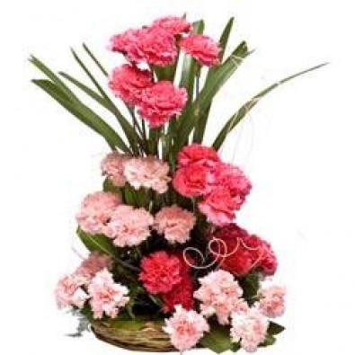Pink Carnation Basket 24 Flowers