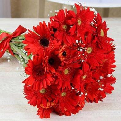Red Gerbera Bouquet 36 Flowers