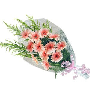 12 Peach Gerbera Bunch with Ribbon