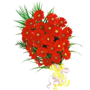 25 Red Gerberas Bunch