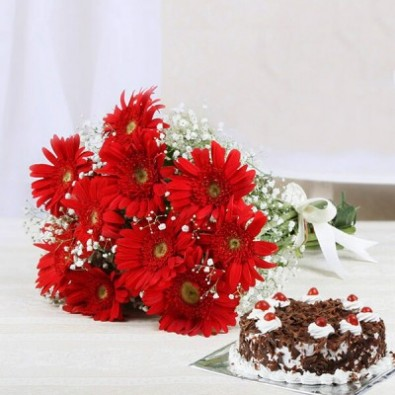 12 Red Gerbera 500 gms Black Forest Cake