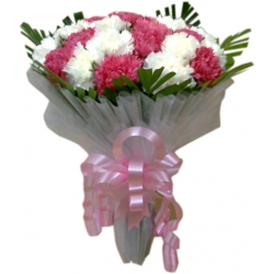 15 White & Pink Carnation Exclusive Bunch