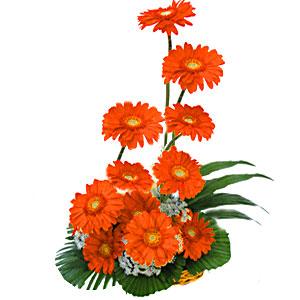 12 orange gerbera basket