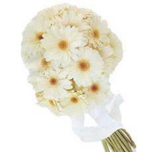 White beauty lies in these 25 soft gerbera bunch