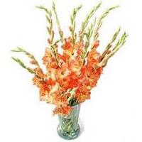 Orange Glads in Vase 12 Flowers