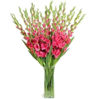 Pink Glads in Vase 36 Flowers