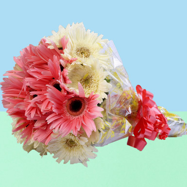Pink White Gerbera Bouquet 12 Flowers