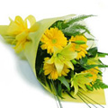 Yellow Gerbera Bouquet 24 Flowers